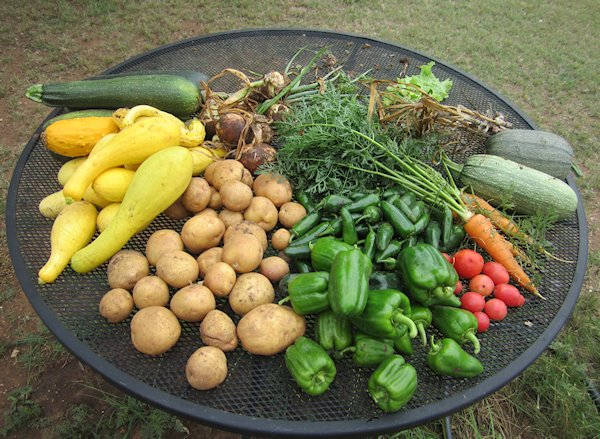 Today's Garden Bounty