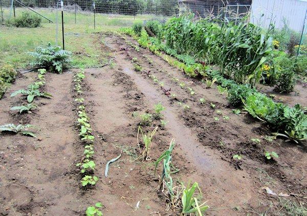 New Garden Items