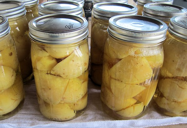 Canned Potatoes