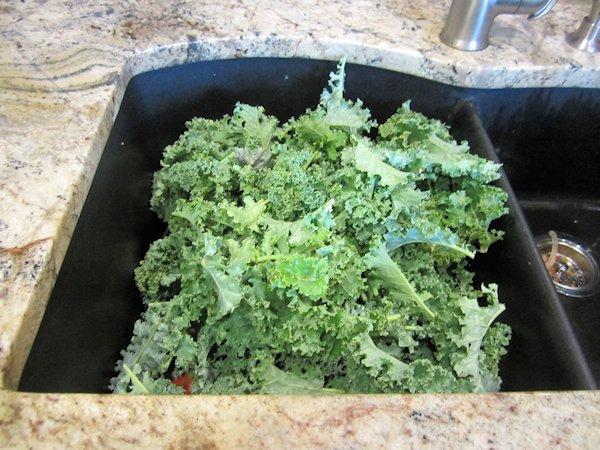 Preserving Kale