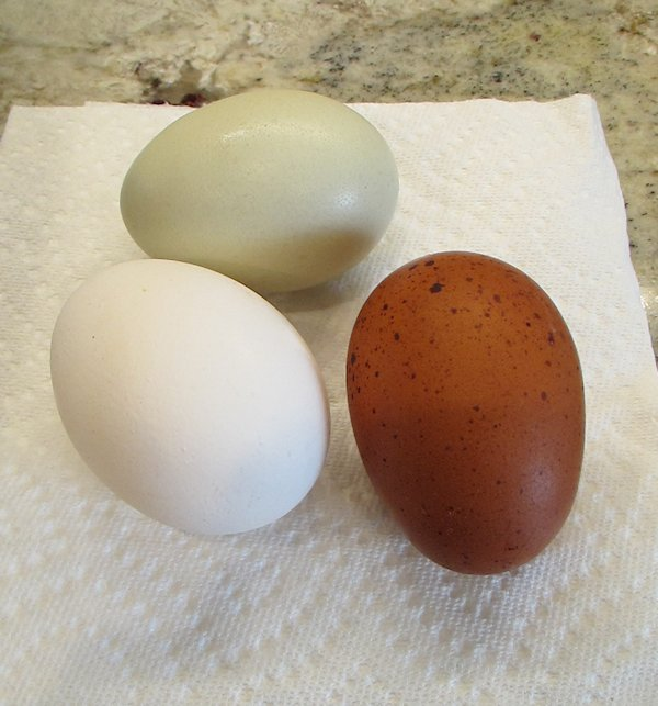 Boiling Eggs in the Pressure Cooker