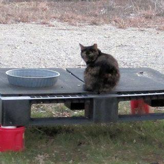 Cat Update