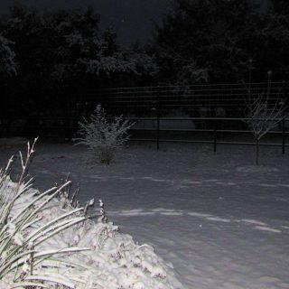 Beautiful Snowy Morning!