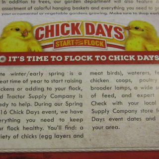 Chick Days Are Coming
