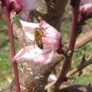 Fruit Trees Are Blooming