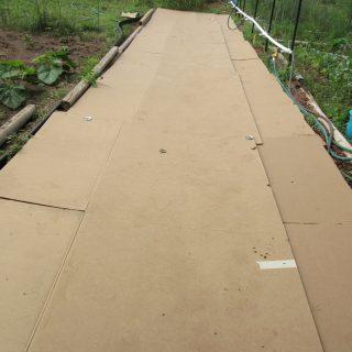 Cardboard Pathway