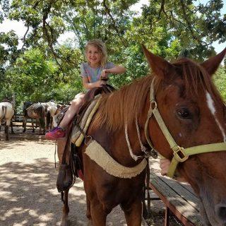 Addie Horse Update