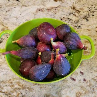 Figs Again