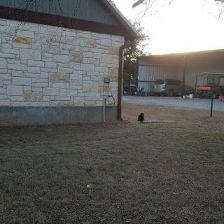Tricking Cat