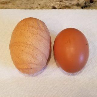 Huge Egg