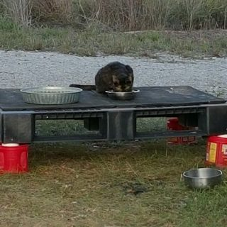Cat's Platform
