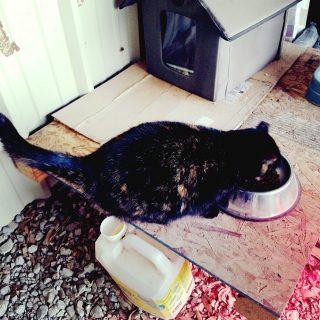 Keeping Cat Warm