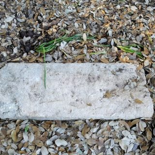 Old Speck's Grave Site