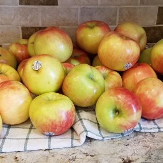 Apples in the Freeze Dryer