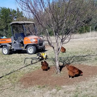 Standoff in the Orchard