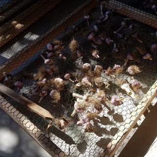 Garlic Drying Racks